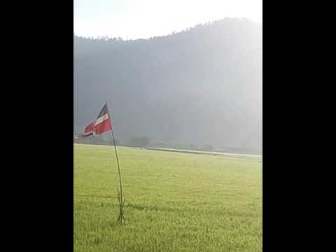 La desagradable sorpresa que me llevé en éste arrozal en Bonao