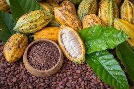 Cacao dominicano.